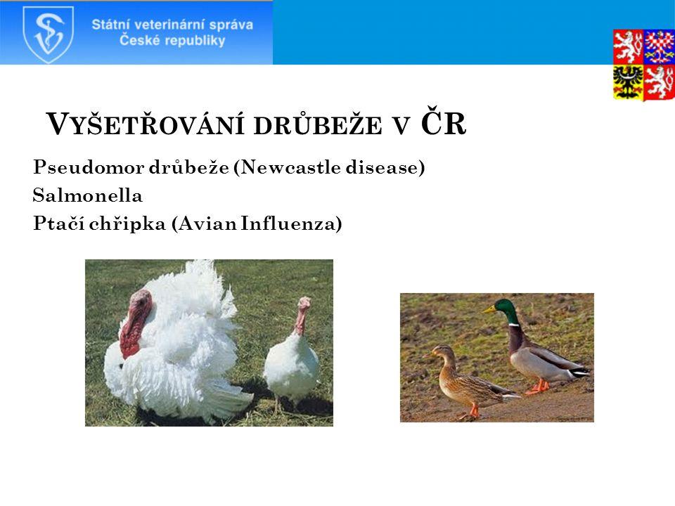 V YŠETŘOVÁNÍ DRŮBEŽE V ČR Pseudomor drůbeže (Newcastle disease) Salmonella Ptačí chřipka (Avian Influenza)