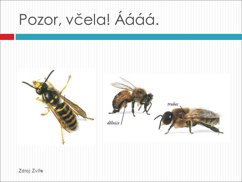 Pozor, včela! Áááá. Zdroj: Zvíře