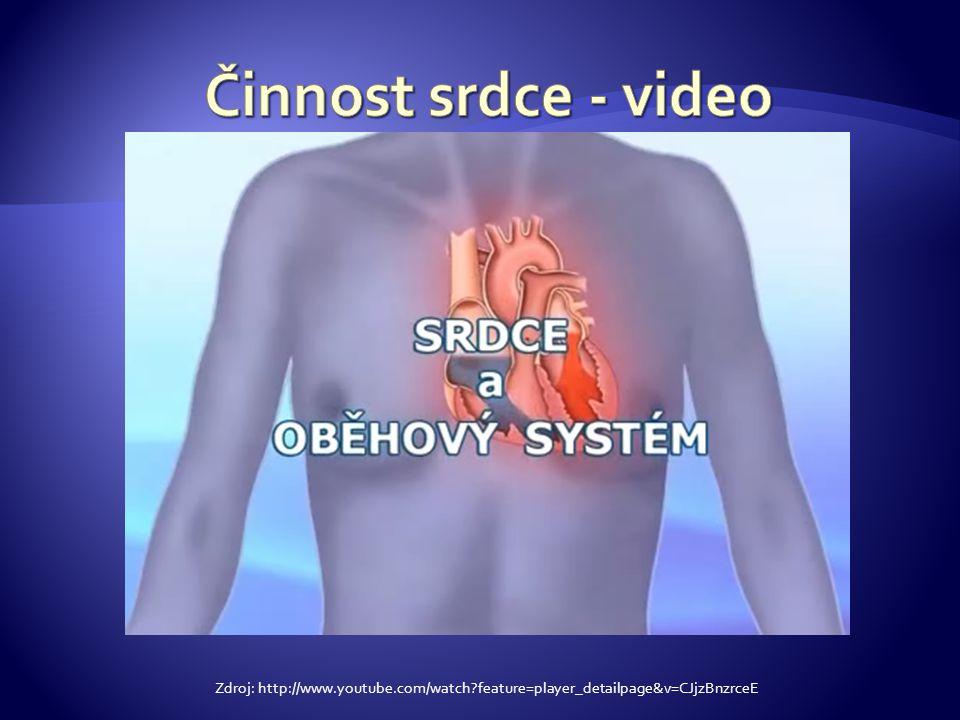 krevní oběh – okysličená krev projde z levé předsíně přes dvojcípou chlopeň do levé komory a odtud pod vysokým tlakem je krev vypuzena do tepny srdečnice ( aorty) a dál do tkání (předává přenášený kyslík a přibírá na svou palubu oxid uhličitý, opět proměňuje svou barvu na tmavě červenou), okysličená krev se vrací horní a dolní dutou žílou z tkání do pravé síně a odtud přes trojcípou chlopeň do pravé komory do plicního oběhu