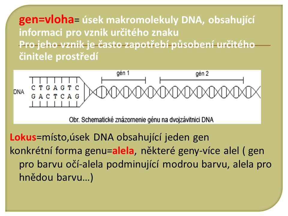 gen=vloha = úsek makromolekuly DNA, obsahující informaci pro vznik určitého znaku Pro jeho vznik je často zapotřebí působení určitého činitele prostře