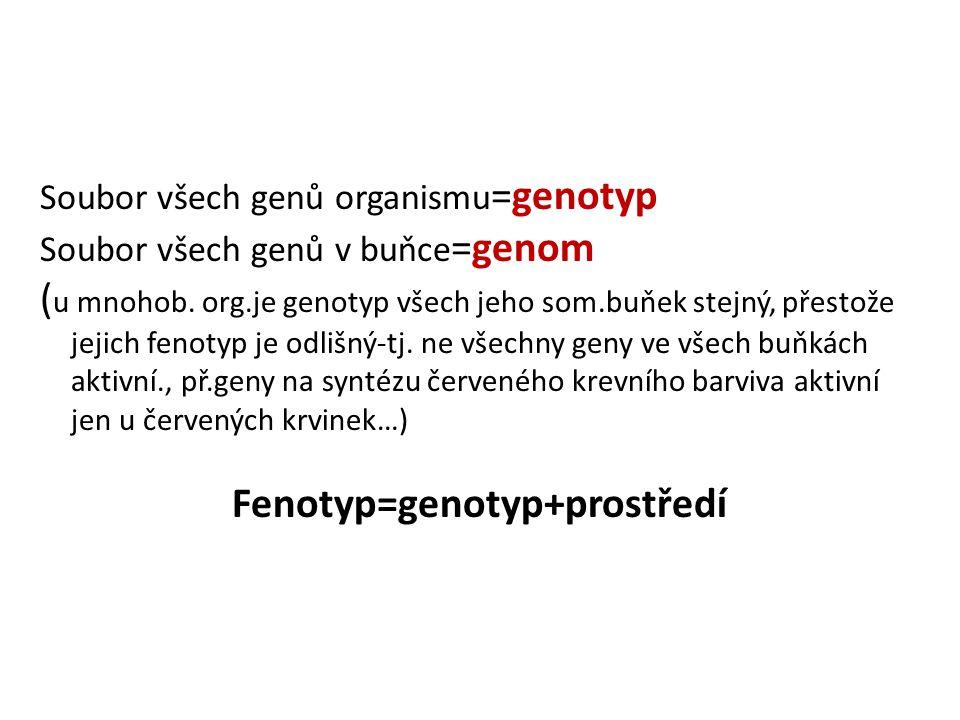 Soubor všech genů organismu =genotyp Soubor všech genů v buňce =genom ( u mnohob. org.je genotyp všech jeho som.buňek stejný, přestože jejich fenotyp
