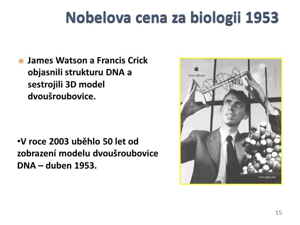  James Watson a Francis Crick objasnili strukturu DNA a sestrojili 3D model dvoušroubovice. 15 V roce 2003 uběhlo 50 let od zobrazení modelu dvoušrou
