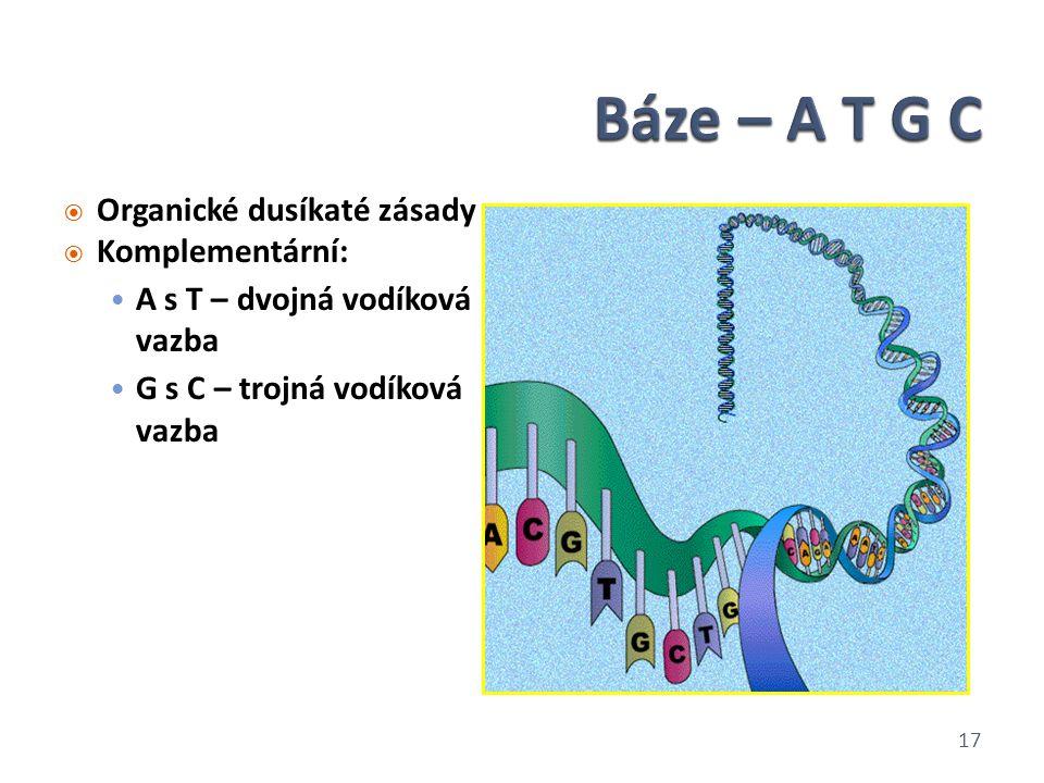  Organické dusíkaté zásady  Komplementární: A s T – dvojná vodíková vazba G s C – trojná vodíková vazba 17