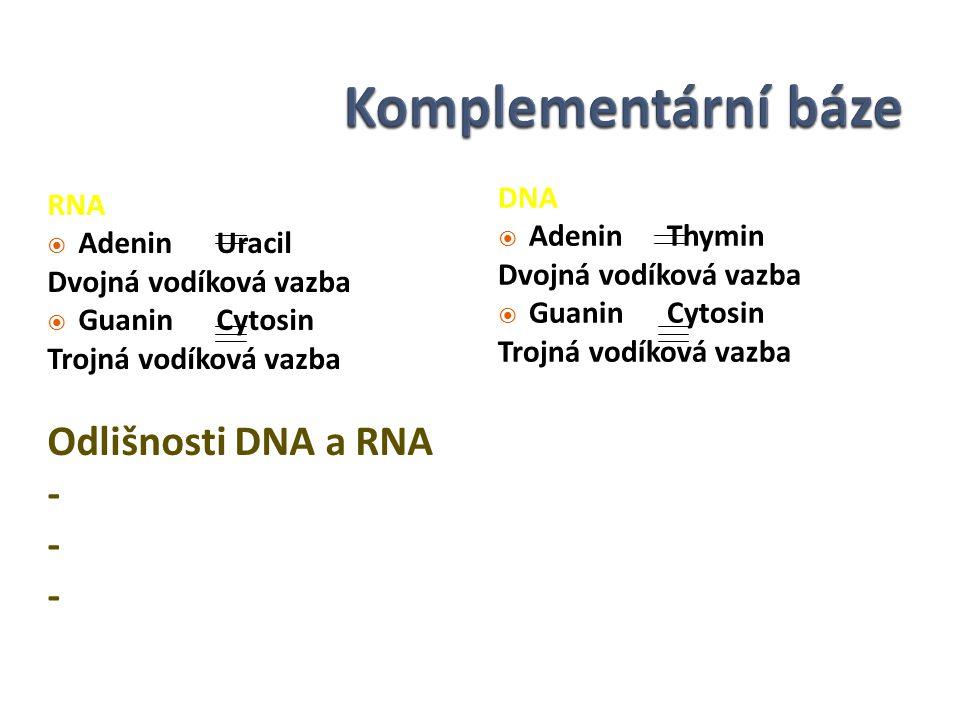 RNA  Adenin Uracil Dvojná vodíková vazba  Guanin Cytosin Trojná vodíková vazba Odlišnosti DNA a RNA - - - DNA  Adenin Thymin Dvojná vodíková vazba