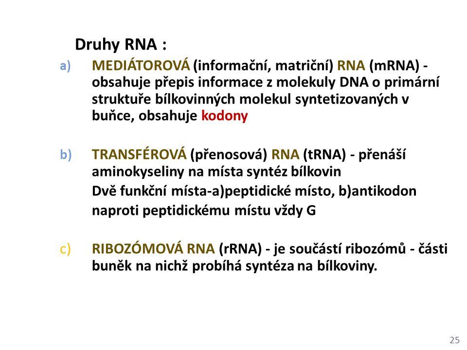 Druhy RNA : a) MEDIÁTOROVÁ (informační, matriční) RNA (mRNA) - obsahuje přepis informace z molekuly DNA o primární struktuře bílkovinných molekul synt