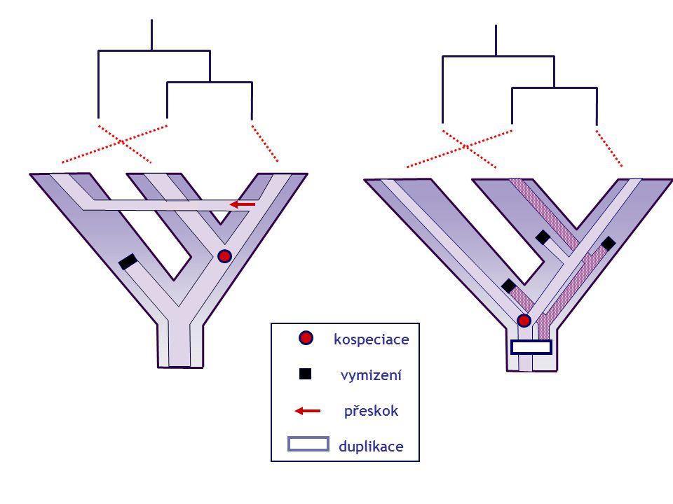 Kospeciace Kolonizace Přeskok (host switch) Vymizení (sorting events) Duplikace