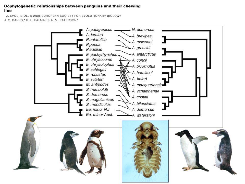 A B C D Sympatrická speciace parazitů (?) AB CD AC BD Monogenea