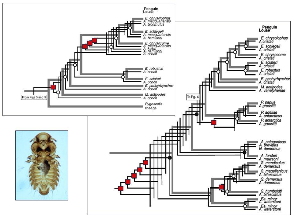 Poissonovo a negativně binomické rozdělení Index of discrepancy Počet hostitelů Množství parazitů kumulativní počet parazitů kumulativní počet hostitelů B A D = A/B Velké agregace parazitů