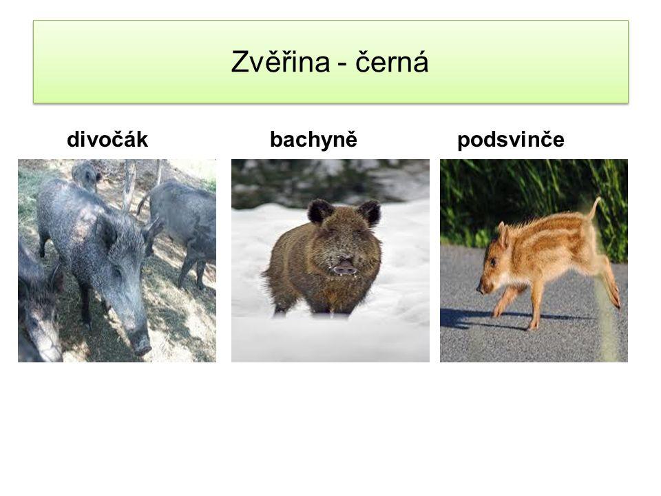 Zvěřina - červená Kamzík Medvěd Muflon