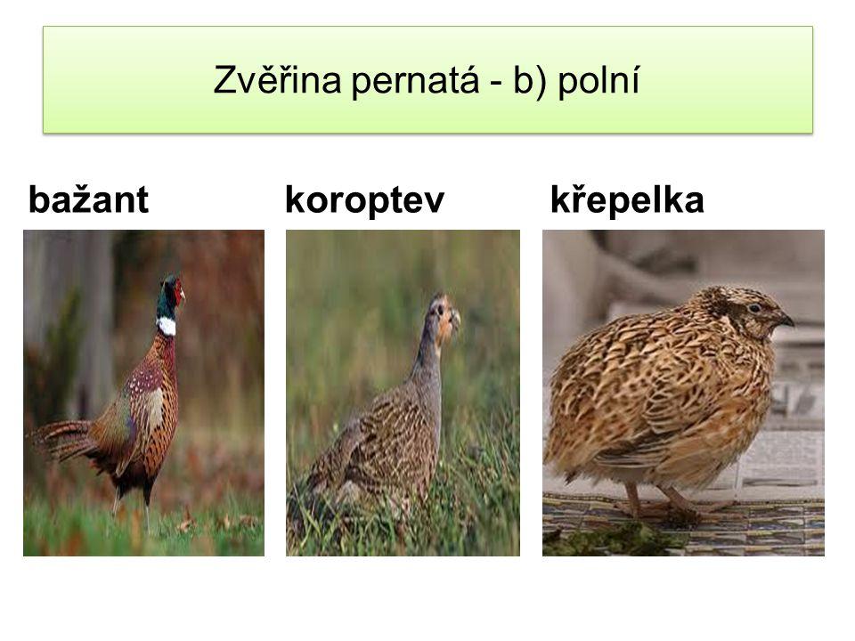 Zvěřina pernatá – c) vodní divoká husa divoká kachna lyska