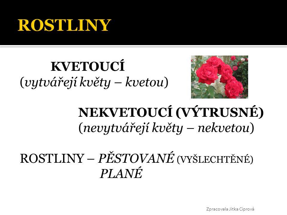 KVETOUCÍ (vytvářejí květy – kvetou) NEKVETOUCÍ (VÝTRUSNÉ) (nevytvářejí květy – nekvetou) ROSTLINY – PĚSTOVANÉ (VYŠLECHTĚNÉ) PLANÉ Zpracovala Jitka Cip