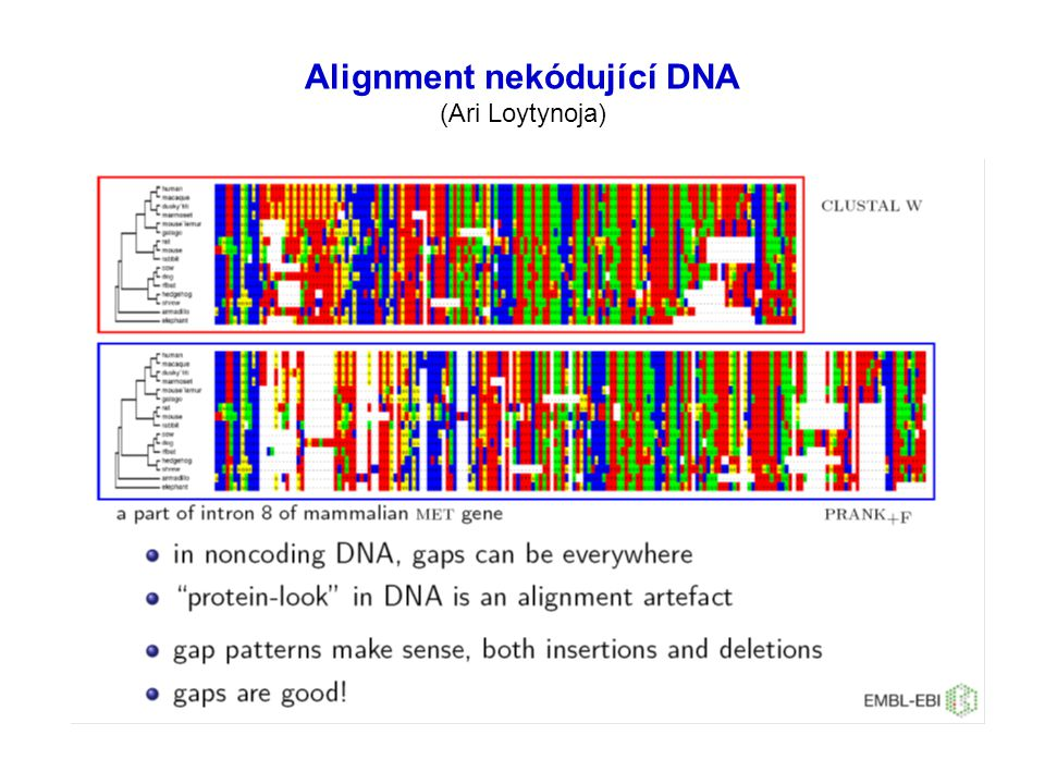 Alignment nekódující DNA (Ari Loytynoja)