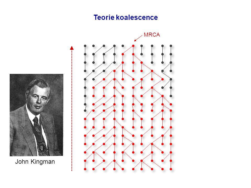 MRCA Teorie koalescence John Kingman