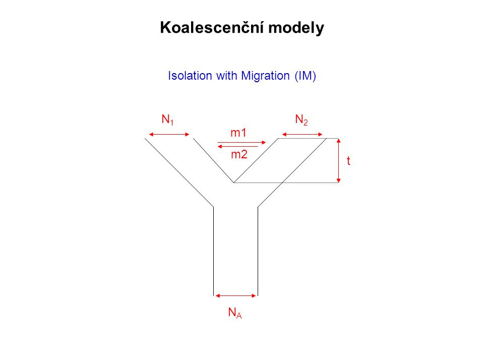 Isolation with Migration (IM) NANA N1N1 N2N2 t m1 m2 Koalescenční modely