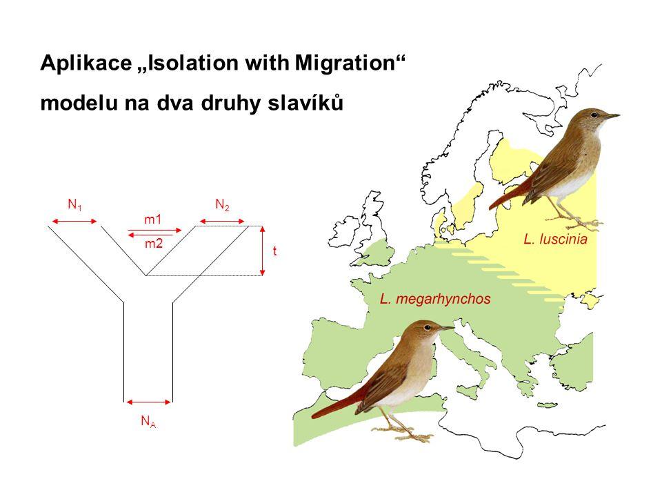 """Aplikace """"Isolation with Migration modelu na dva druhy slavíků NANA N1N1 N2N2 t m1 m2"""
