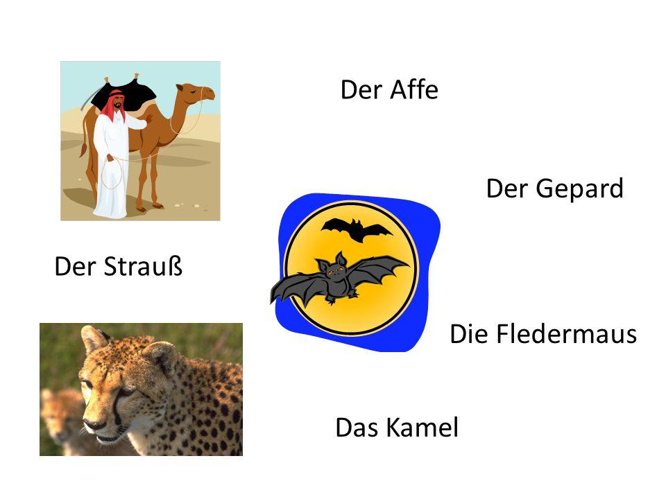 Der Affe Der Strauß Der Gepard Das Kamel Die Fledermaus