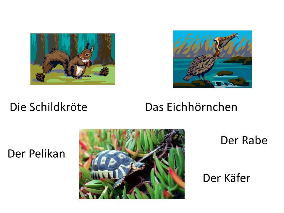Der Rabe Die SchildkröteDas Eichhörnchen Der Pelikan Der Käfer