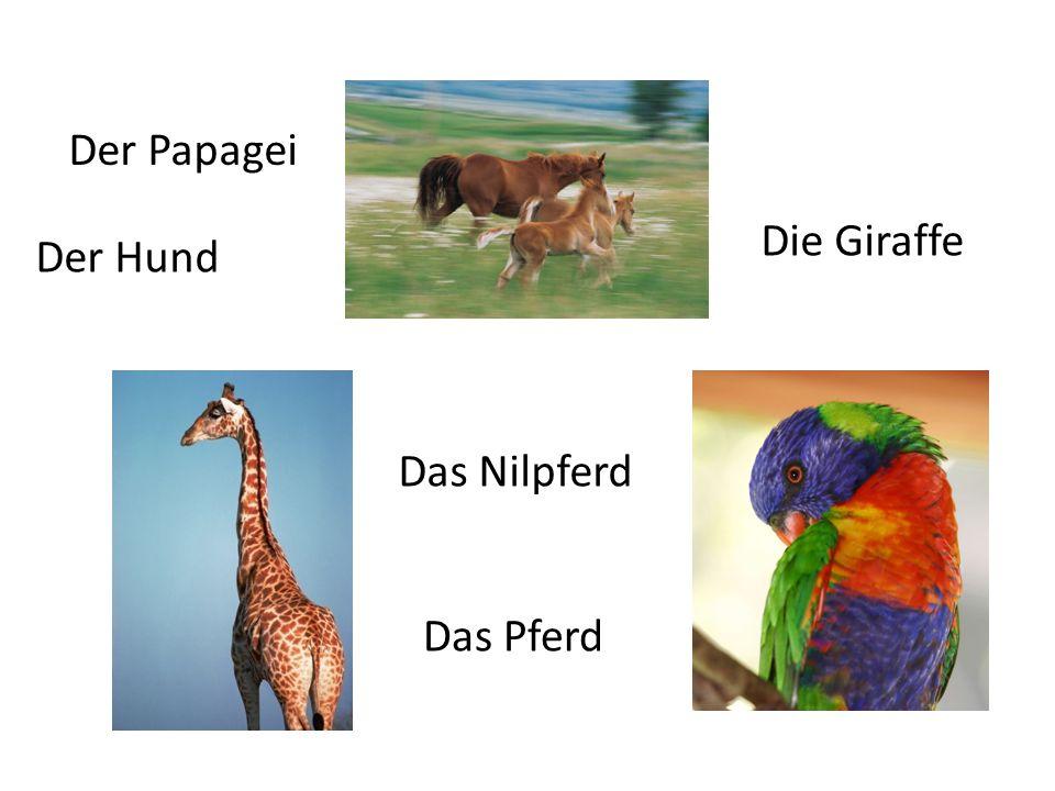 Der Hund Das Nilpferd Der Papagei Die Giraffe Das Pferd