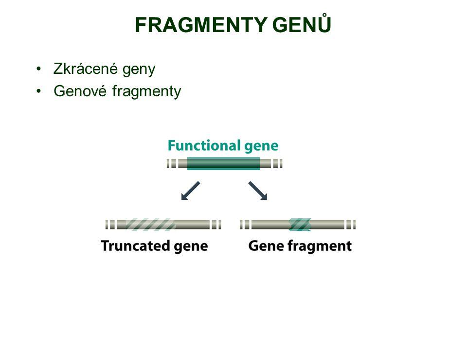 FRAGMENTY GENŮ Zkrácené geny Genové fragmenty