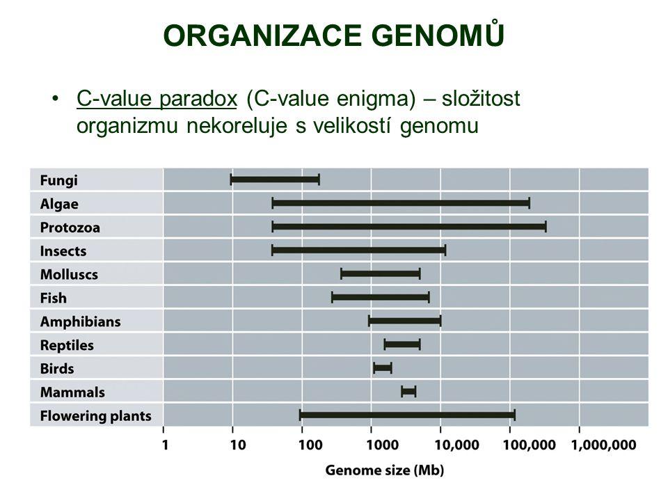 C-value paradox (C-value enigma) – složitost organizmu nekoreluje s velikostí genomu