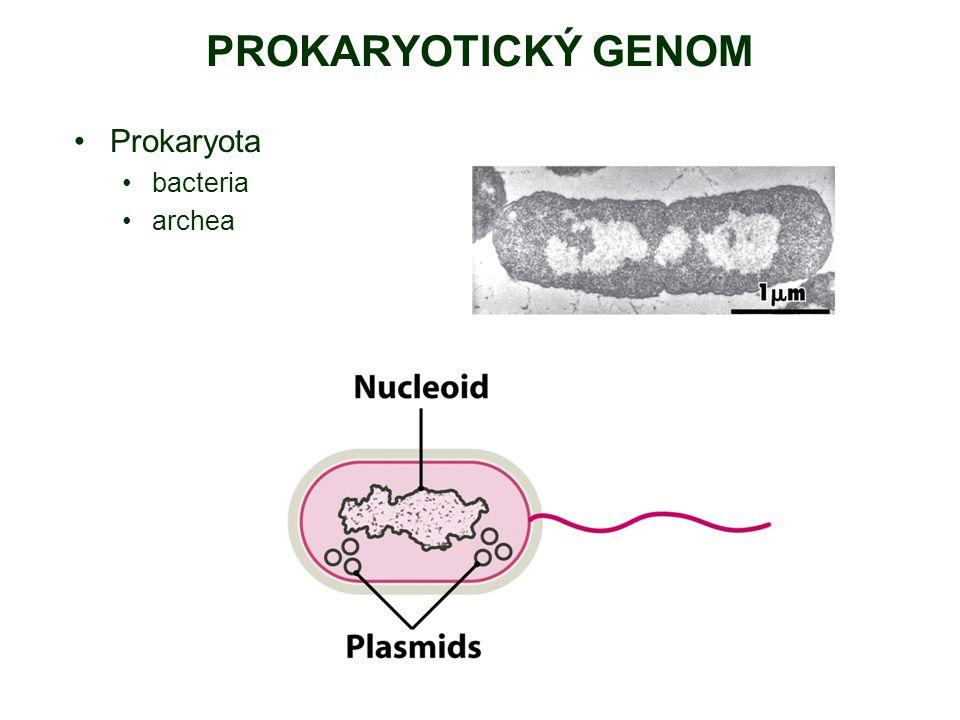 Prokaryota bacteria archea