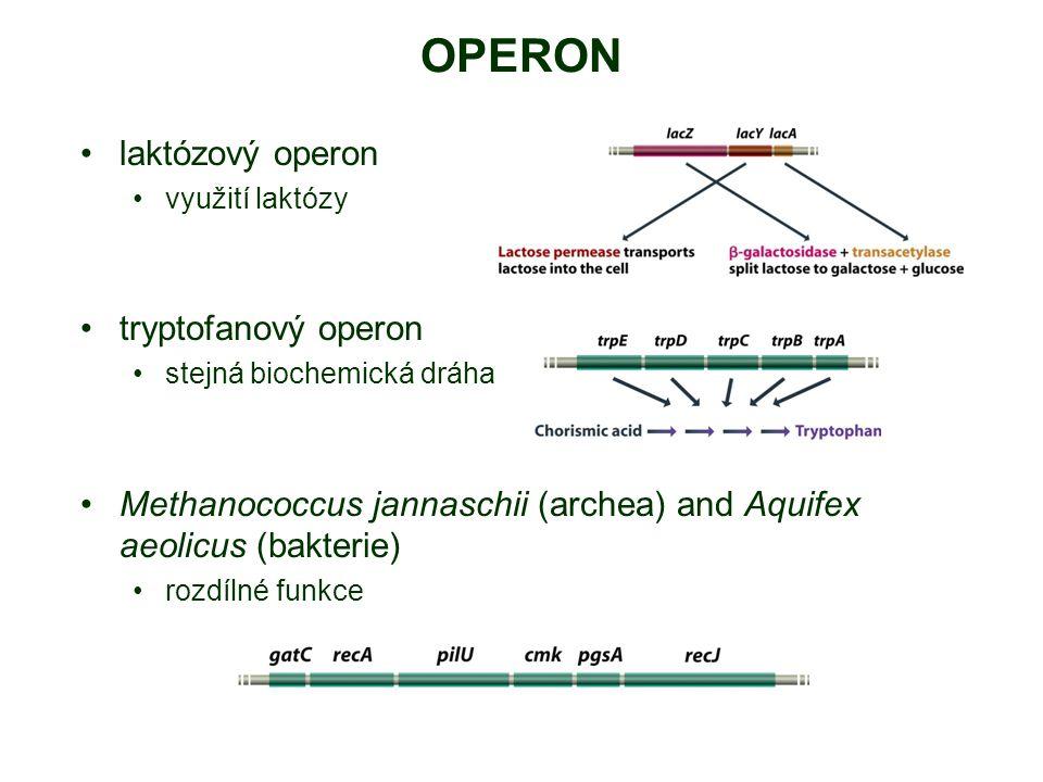 OPERON laktózový operon využití laktózy tryptofanový operon stejná biochemická dráha Methanococcus jannaschii (archea) and Aquifex aeolicus (bakterie) rozdílné funkce