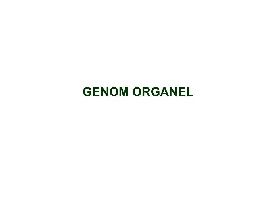 GENOM ORGANEL