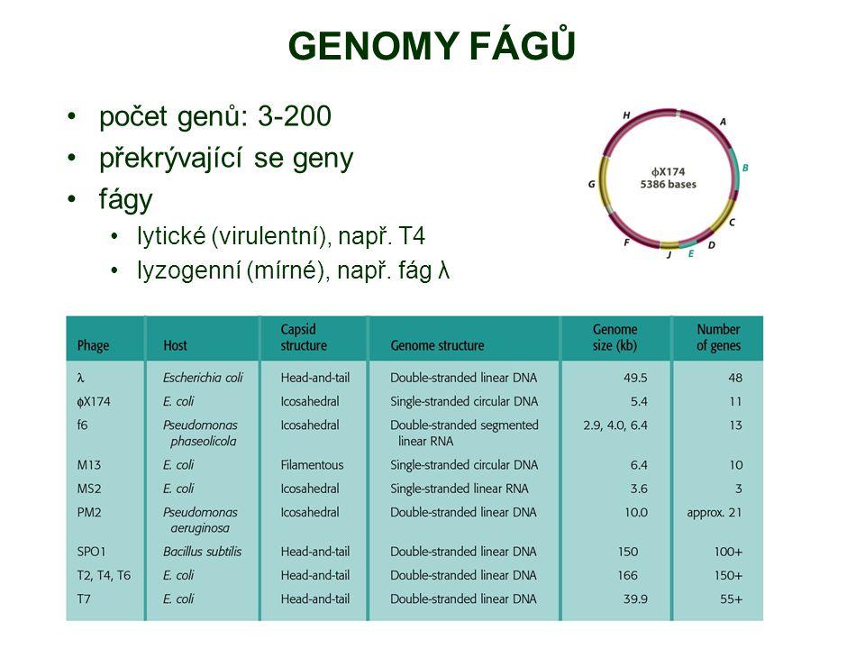 GENOMY FÁGŮ počet genů: 3-200 překrývající se geny fágy lytické (virulentní), např. T4 lyzogenní (mírné), např. fág λ
