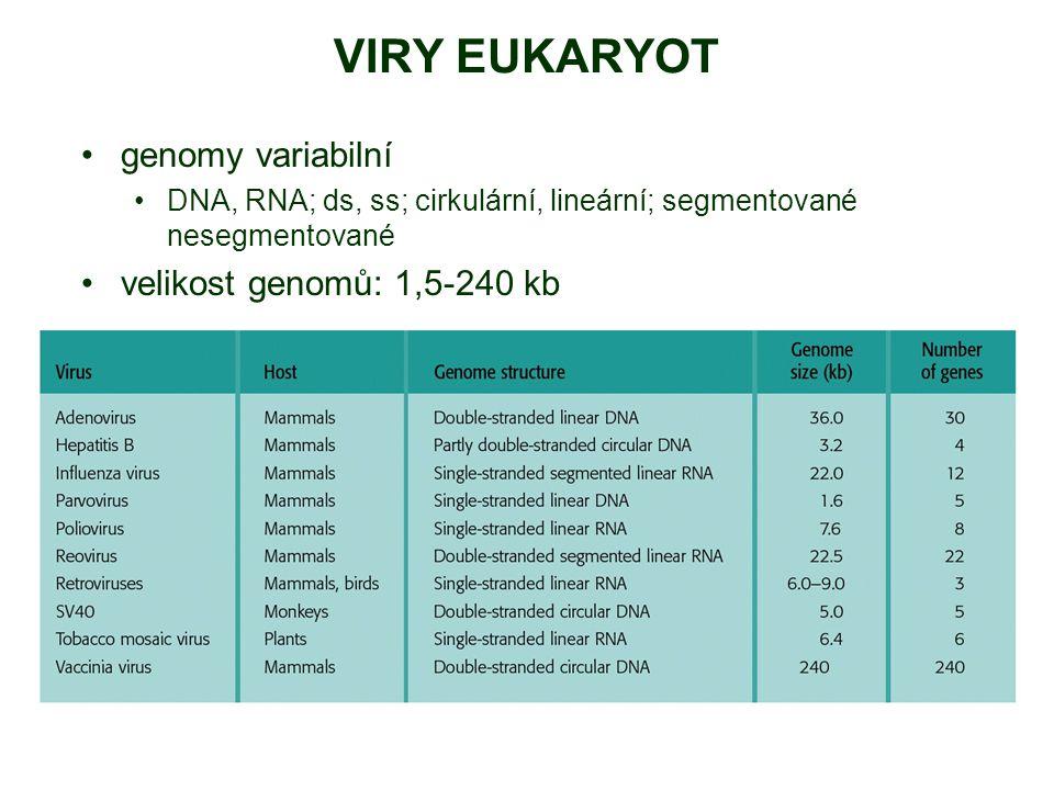 VIRY EUKARYOT genomy variabilní DNA, RNA; ds, ss; cirkulární, lineární; segmentované nesegmentované velikost genomů: 1,5-240 kb
