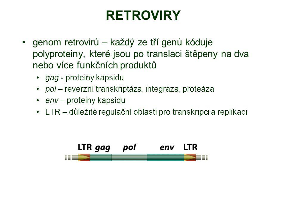 RETROVIRY genom retrovirů – každý ze tří genů kóduje polyproteiny, které jsou po translaci štěpeny na dva nebo více funkčních produktů gag - proteiny