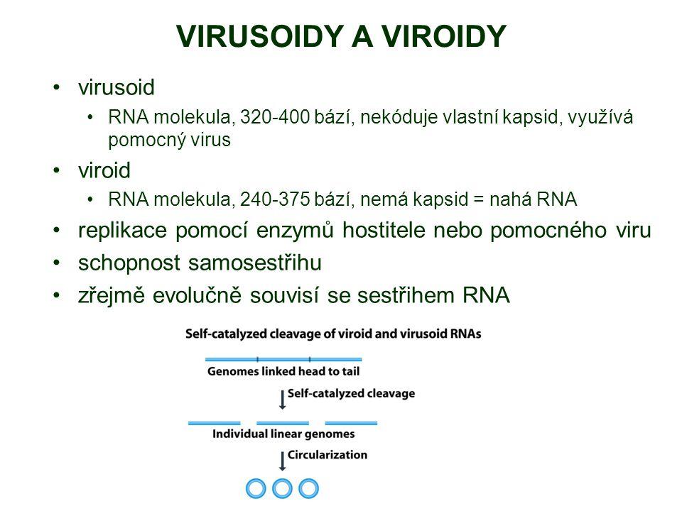 VIRUSOIDY A VIROIDY virusoid RNA molekula, 320-400 bází, nekóduje vlastní kapsid, využívá pomocný virus viroid RNA molekula, 240-375 bází, nemá kapsid = nahá RNA replikace pomocí enzymů hostitele nebo pomocného viru schopnost samosestřihu zřejmě evolučně souvisí se sestřihem RNA