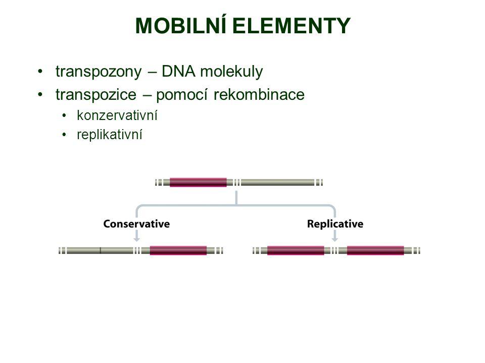 MOBILNÍ ELEMENTY transpozony – DNA molekuly transpozice – pomocí rekombinace konzervativní replikativní