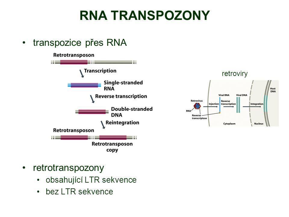 RNA TRANSPOZONY transpozice přes RNA retrotranspozony obsahující LTR sekvence bez LTR sekvence retroviry