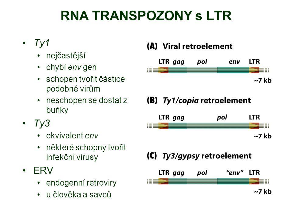 RNA TRANSPOZONY s LTR Ty1 nejčastější chybí env gen schopen tvořit částice podobné virům neschopen se dostat z buňky Ty3 ekvivalent env některé schopn