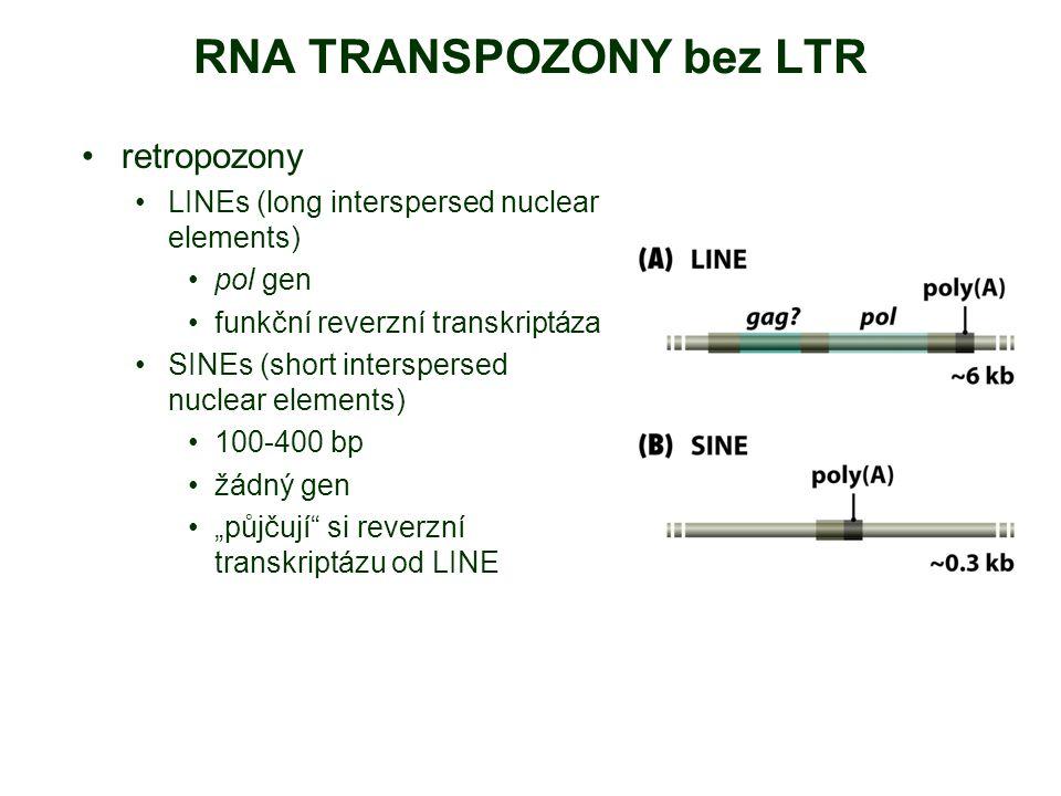 """RNA TRANSPOZONY bez LTR retropozony LINEs (long interspersed nuclear elements) pol gen funkční reverzní transkriptáza SINEs (short interspersed nuclear elements) 100-400 bp žádný gen """"půjčují si reverzní transkriptázu od LINE"""