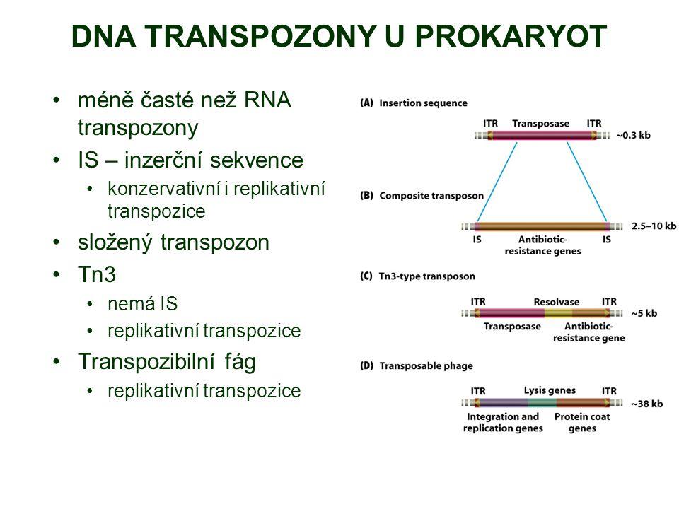 DNA TRANSPOZONY U PROKARYOT méně časté než RNA transpozony IS – inzerční sekvence konzervativní i replikativní transpozice složený transpozon Tn3 nemá