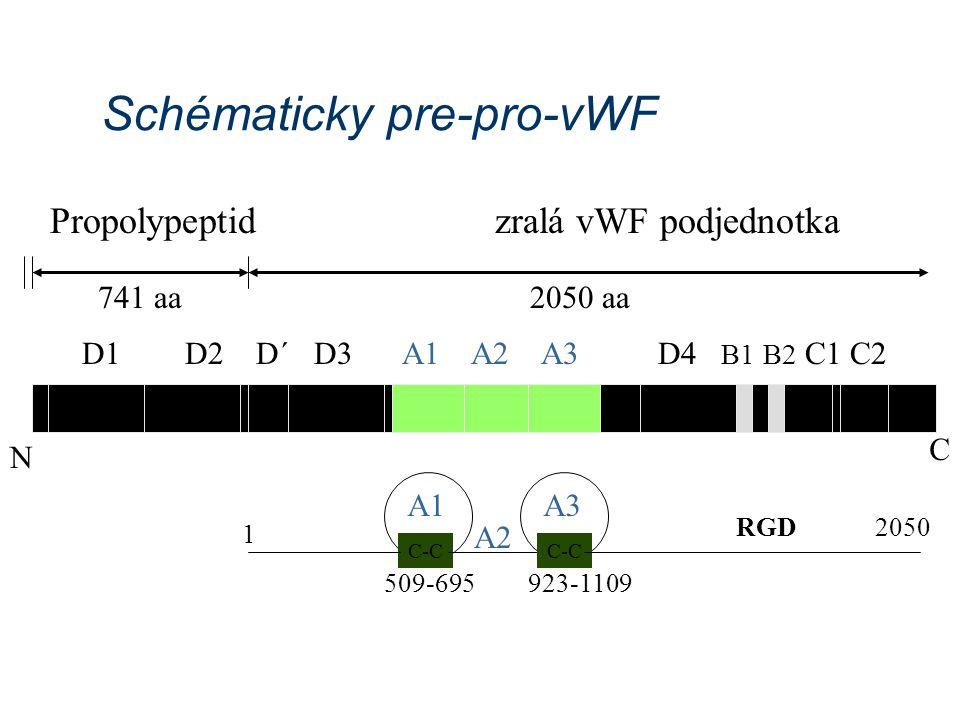 Schématicky pre-pro-vWF D1 D2 D´ D3 N A1 A2 A3D4 B1 B2 C1 C2 C Propolypeptid zralá vWF podjednotka 741 aa2050 aa C-C A1 C-C 509-695923-1109 RGD 2050 A