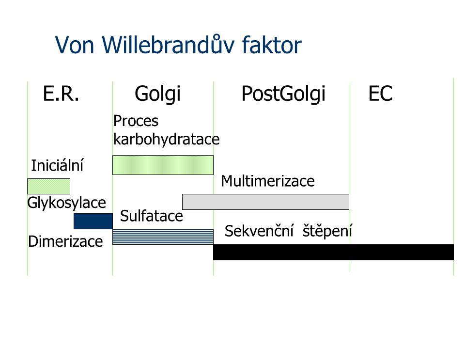 Von Willebrandův faktor E.R.GolgiPostGolgiEC Iniciální Glykosylace Dimerizace Sulfatace Proces karbohydratace Multimerizace Sekvenční štěpení