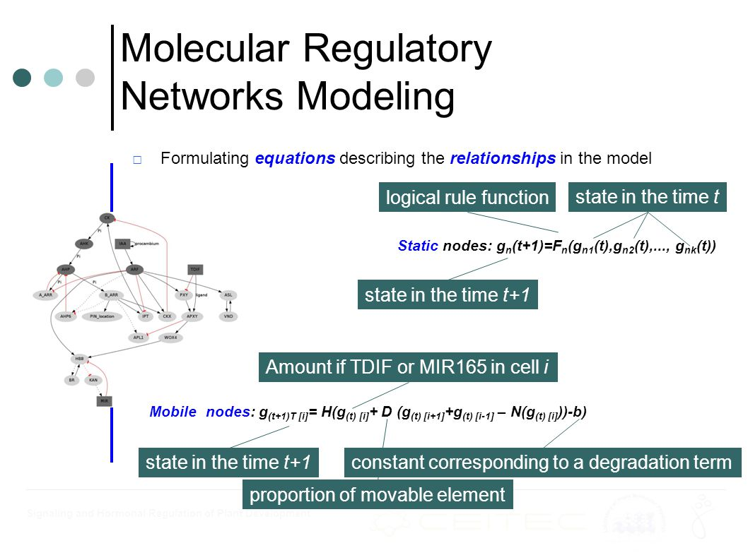 Signaling and Hormonal Regulation of Plant Development □Formulating equations describing the relationships in the model Molecular Regulatory Networks Modeling Static nodes: g n (t+1)=F n (g n1 (t),g n2 (t),..., g nk (t)) Mobile nodes: g (t+1)T [i] = H(g (t) [i] + D (g (t) [i+1] +g (t) [i-1] – N(g (t) [i] ))-b) state in the time t+1 state in the time t logical rule function state in the time t+1 Amount if TDIF or MIR165 in cell i proportion of movable element constant corresponding to a degradation term