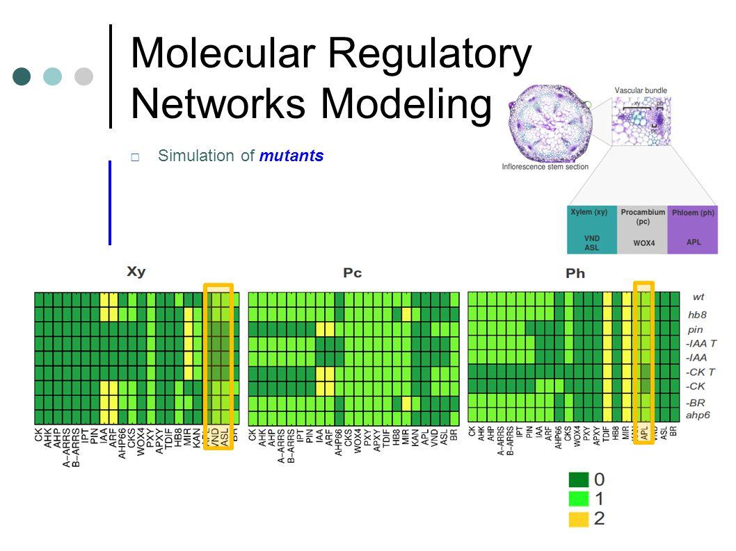 Signaling and Hormonal Regulation of Plant Development Molecular Regulatory Networks Modeling Benitez and Hejatko, submitted □Simulation of mutants