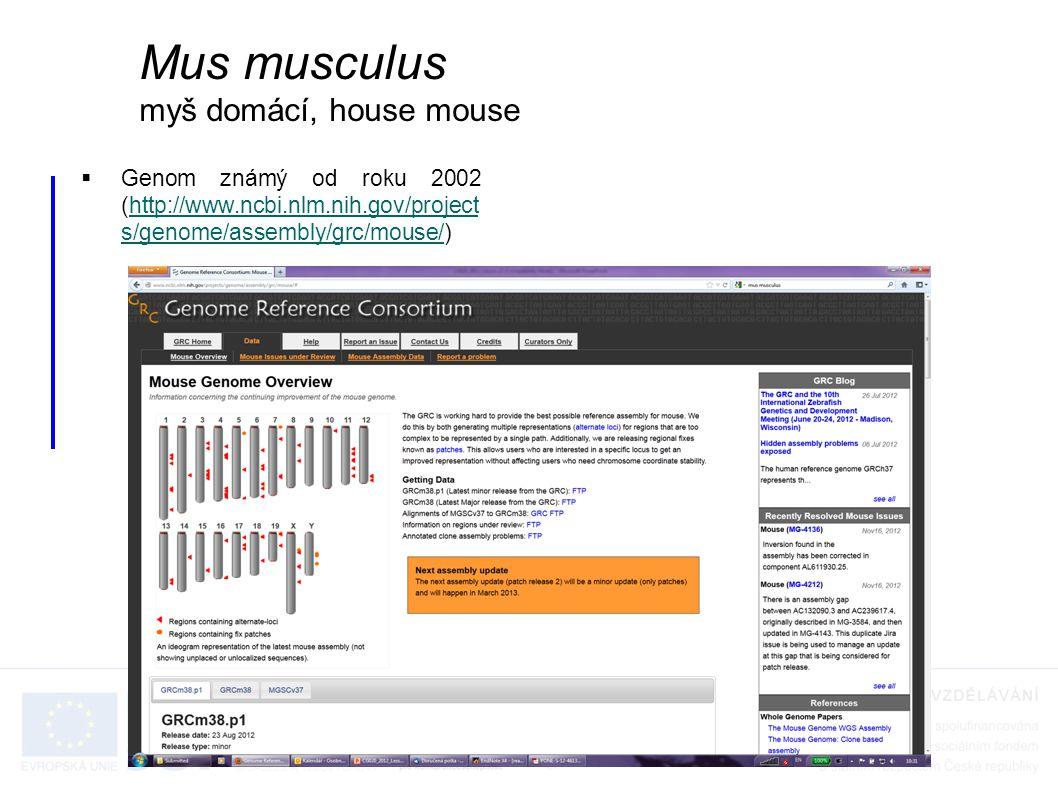  Genom známý od roku 2002 (http://www.ncbi.nlm.nih.gov/project s/genome/assembly/grc/mouse/)http://www.ncbi.nlm.nih.gov/project s/genome/assembly/grc/mouse/ Mus musculus myš domácí, house mouse
