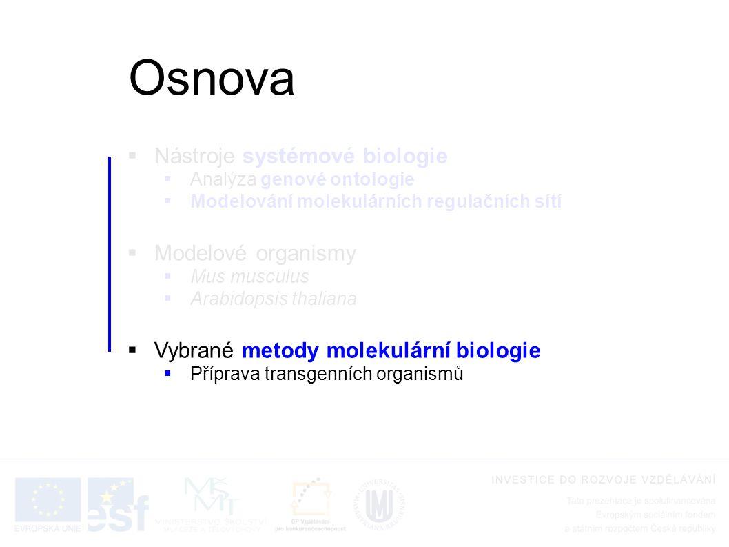  Nástroje systémové biologie  Analýza genové ontologie  Modelování molekulárních regulačních sítí  Modelové organismy  Mus musculus  Arabidopsis thaliana  Vybrané metody molekulární biologie  Příprava transgenních organismů Osnova