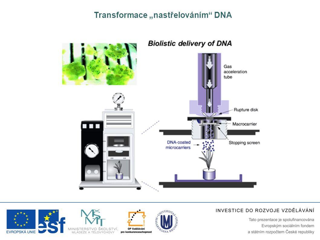 """Transformace """"nastřelováním DNA"""