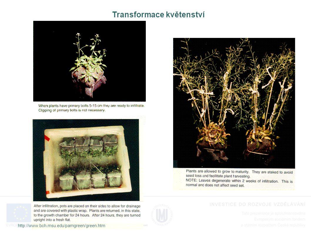 Transformace květenství http://www.bch.msu.edu/pamgreen/green.htm