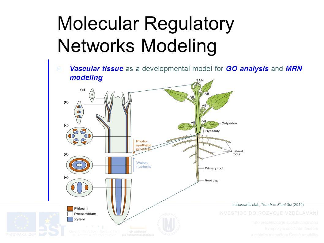Molecular Regulatory Networks Modeling □Vascular tissue as a developmental model for GO analysis and MRN modeling Lehesranta etal., Trends in Plant Sci (2010)