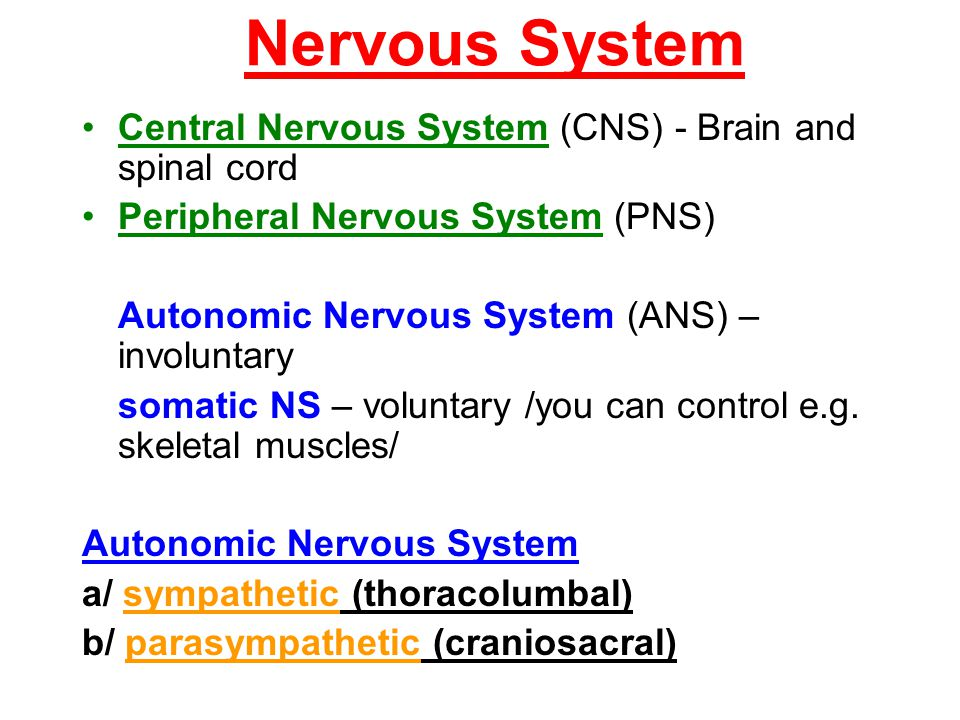 Nervous System Central Nervous System (CNS) - Brain and spinal cord Peripheral Nervous System (PNS) Autonomic Nervous System (ANS) – involuntary somat