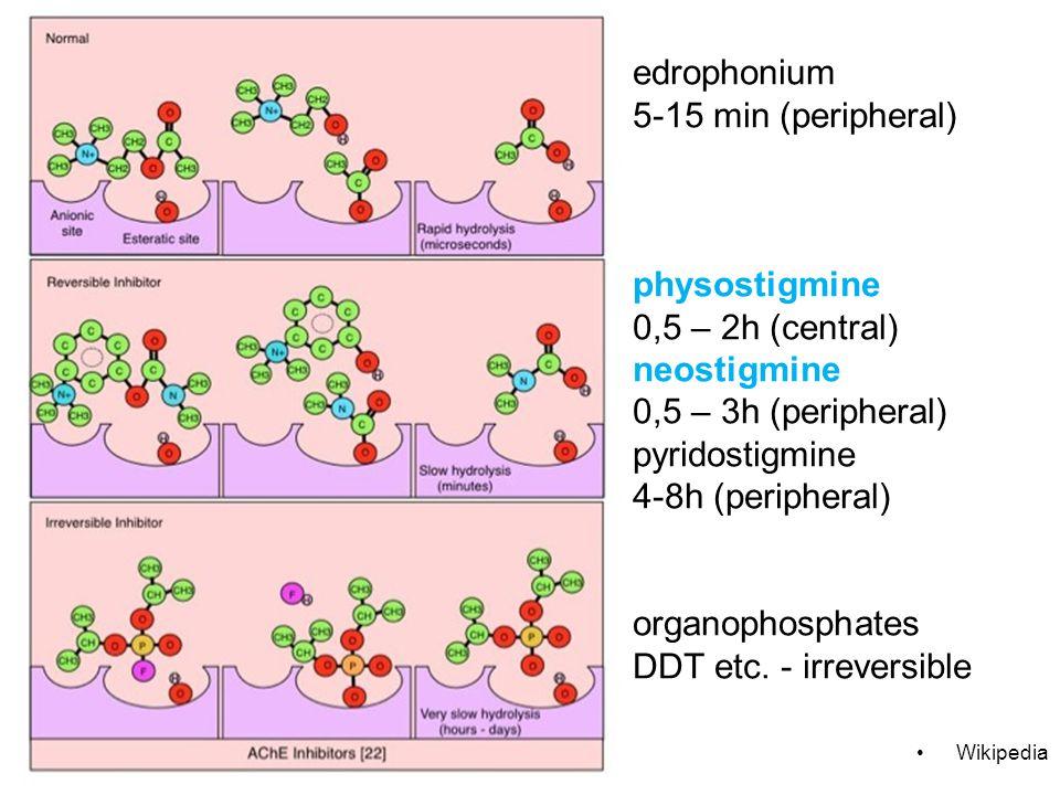 edrophonium 5-15 min (peripheral) physostigmine 0,5 – 2h (central) neostigmine 0,5 – 3h (peripheral) pyridostigmine 4-8h (peripheral) organophosphates DDT etc.