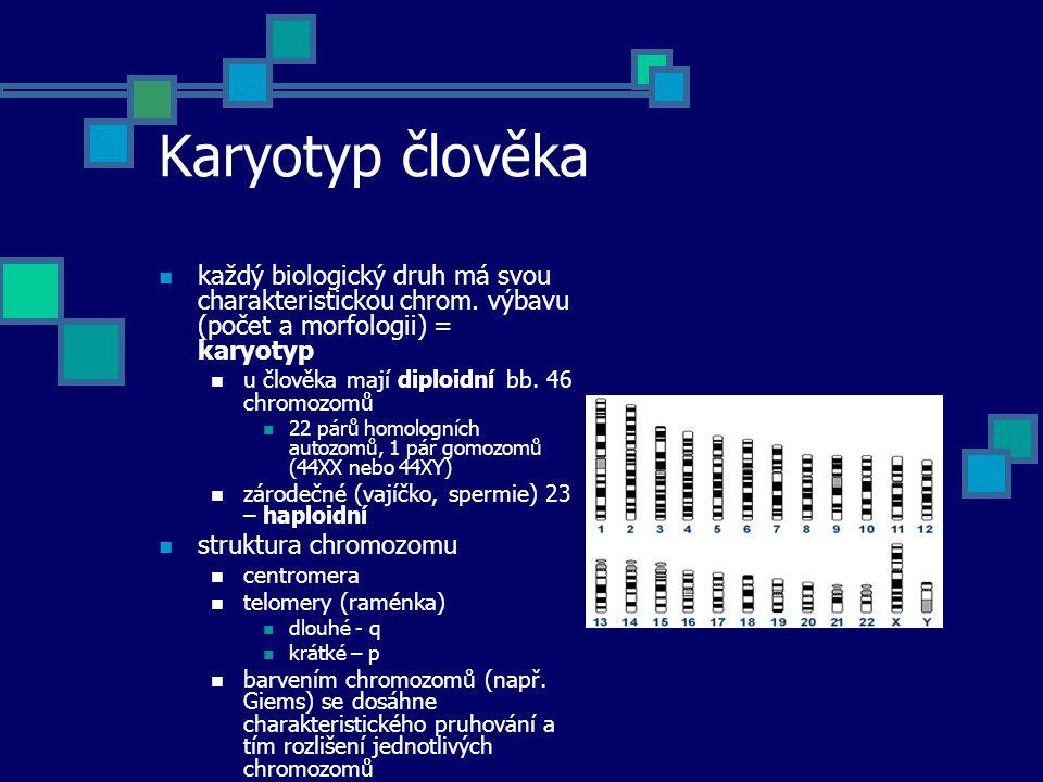 Karyotyp podle Denverské klasifikace