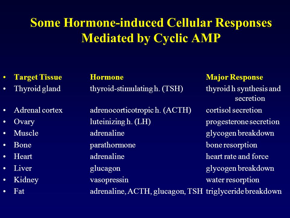 Some Hormone-induced Cellular Responses Mediated by Cyclic AMP Target Tissue Hormone Major Response Thyroid gland thyroid-stimulating h. (TSH) thyroid