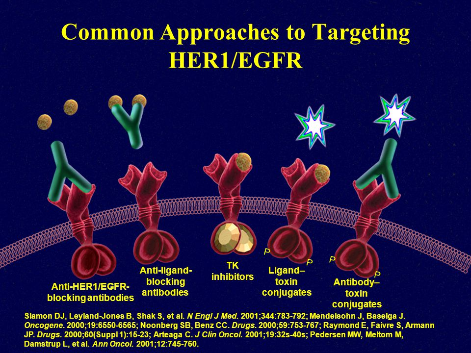 Common Approaches to Targeting HER1/EGFR Slamon DJ, Leyland-Jones B, Shak S, et al. N Engl J Med. 2001;344:783-792; Mendelsohn J, Baselga J. Oncogene.